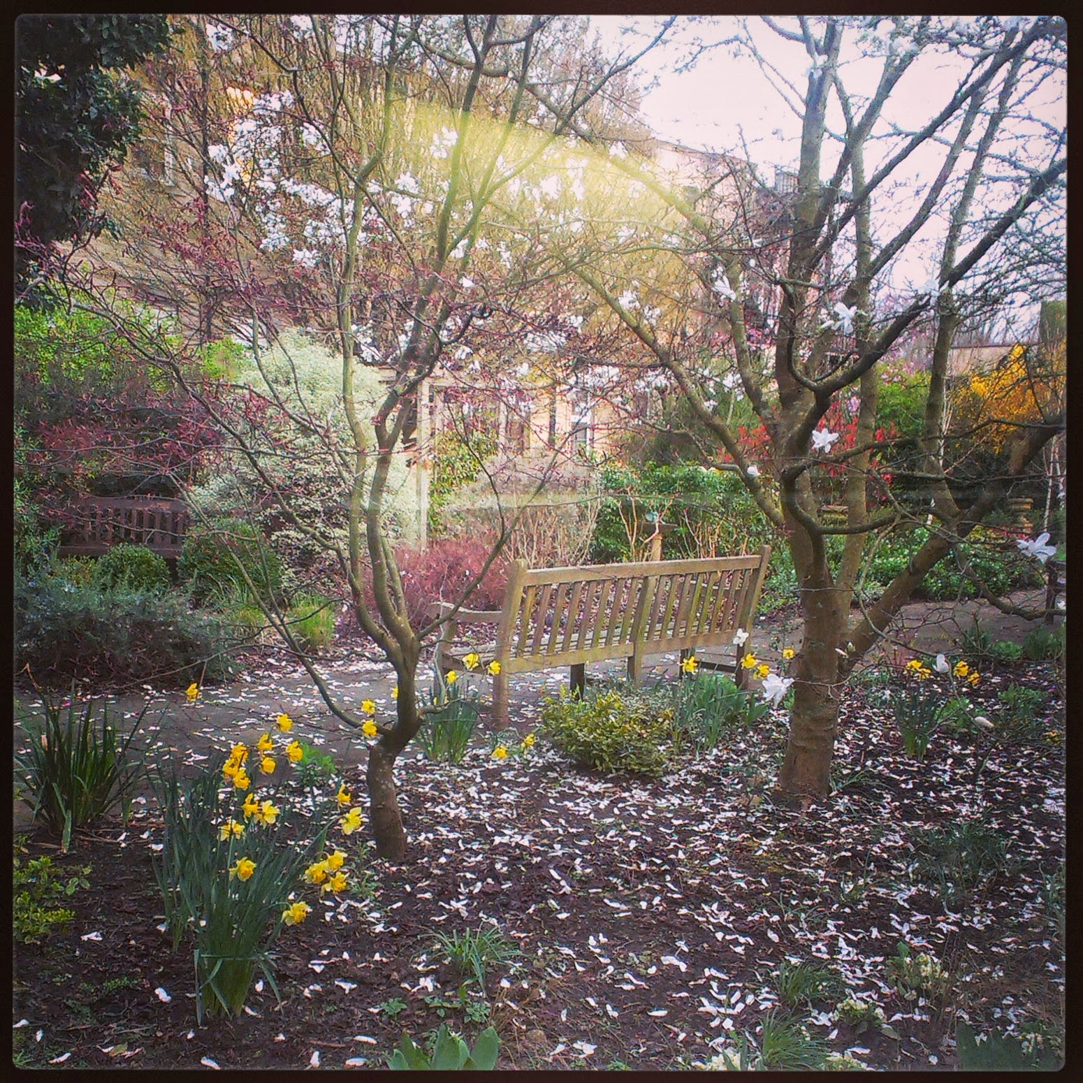 Garden at RUH Bath