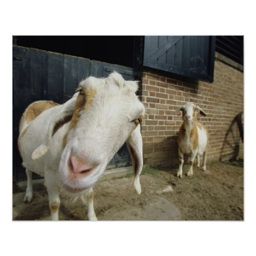 The Goat Says Hi | Funny Animal Photo Print