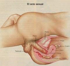 Semen cerca de la vagina, ayuda por favor! -