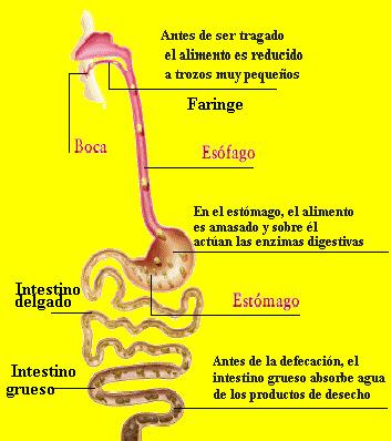 Los ejercicios para la quema de la grasa en la parte interior de las caderas