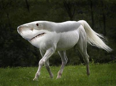 Shark horse creature