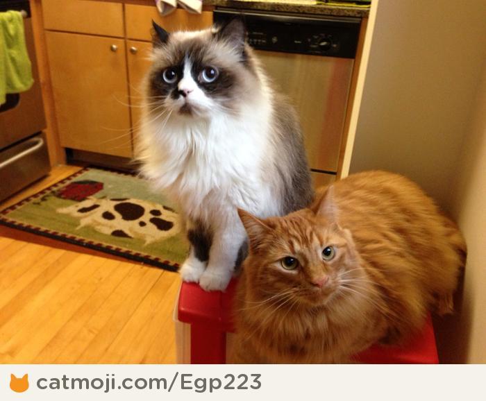 Фото 7 из Catmoji - социальная сеть для котов