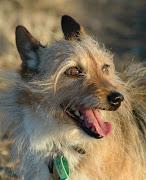 El miedo a los perros se conoce como cinofobia, y como todas las fobias es .