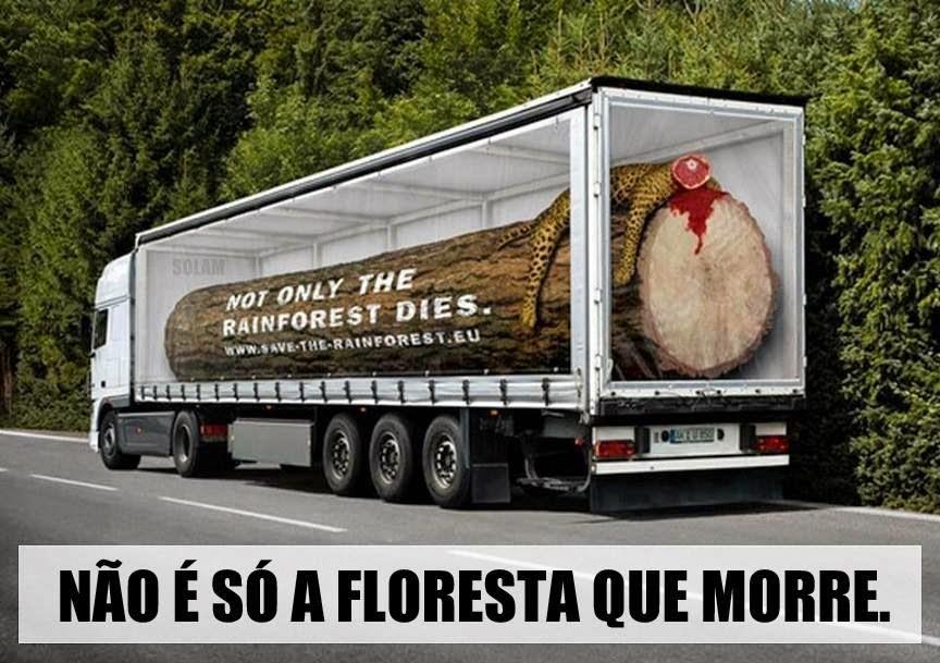 Não é só a floresta que morre