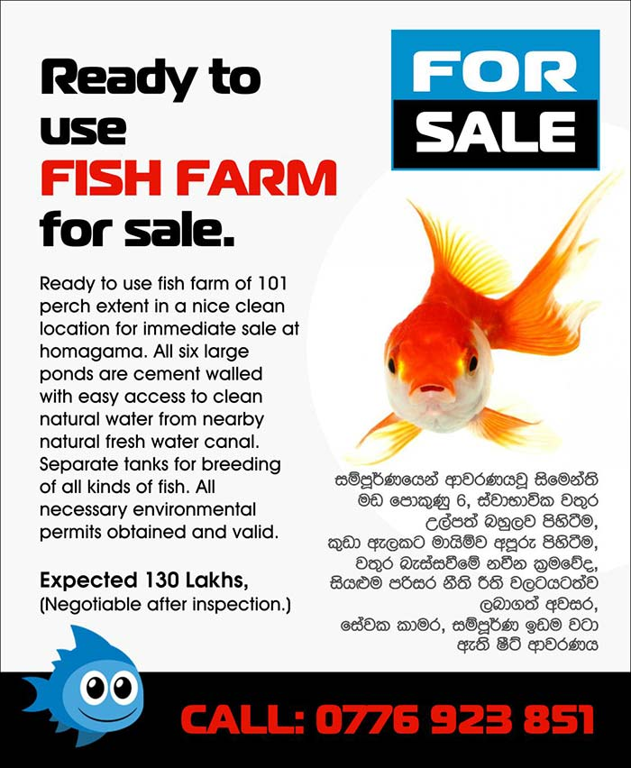 Ready to use FISH FARM for sale in Homagama