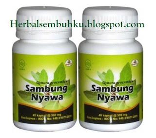 Jual kapsul SAMBUNG NYAWA Surabaya | 085755201000 | stimulan ginjal, menurunkan tekanan darah tinggi, menurunkan kolesterol