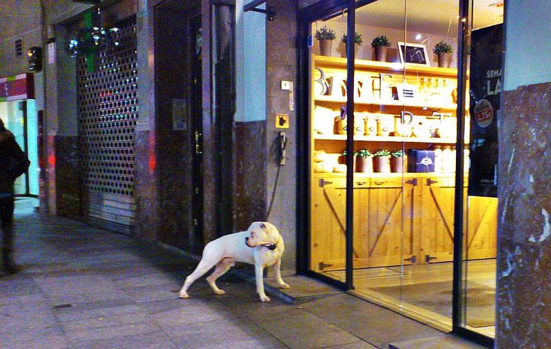 perro,comercio,Bilbao,Cancerbero
