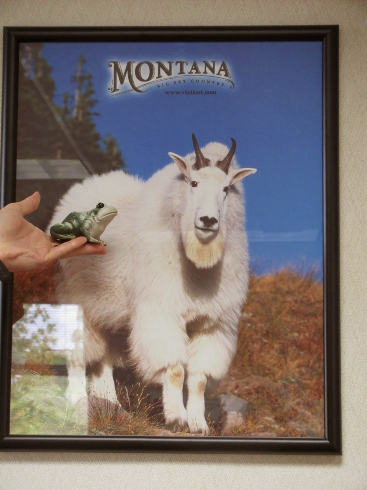 Frog poses with a picture of a mountain goat at a Montana welcome sign