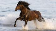 Caballos Corriendo en la Playas Imágenes de Animales caballos corriendo imagenes de animales