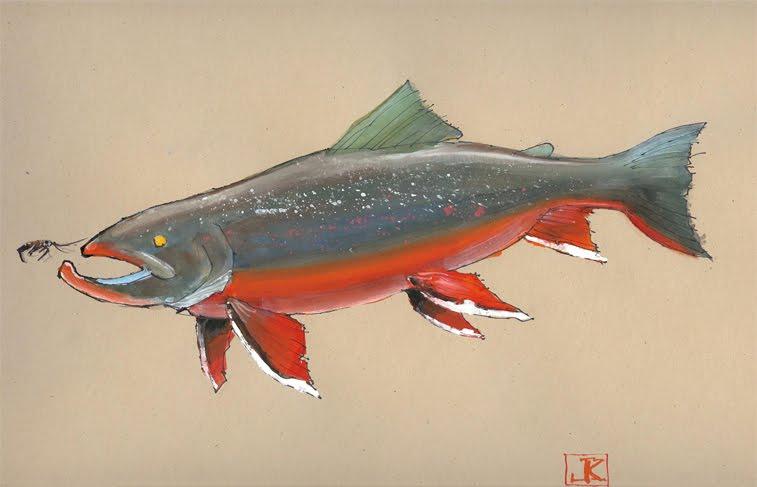 Drawing flies 365 drawing fish 52 9 arctic char for Arctic char fish
