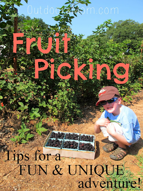 Fruit Picking - Add Adventure Without Adding Cost.