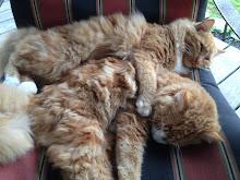 George & Barney Barncats!