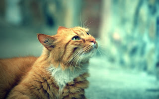 Cat Look The Street Day HD Wallpaper