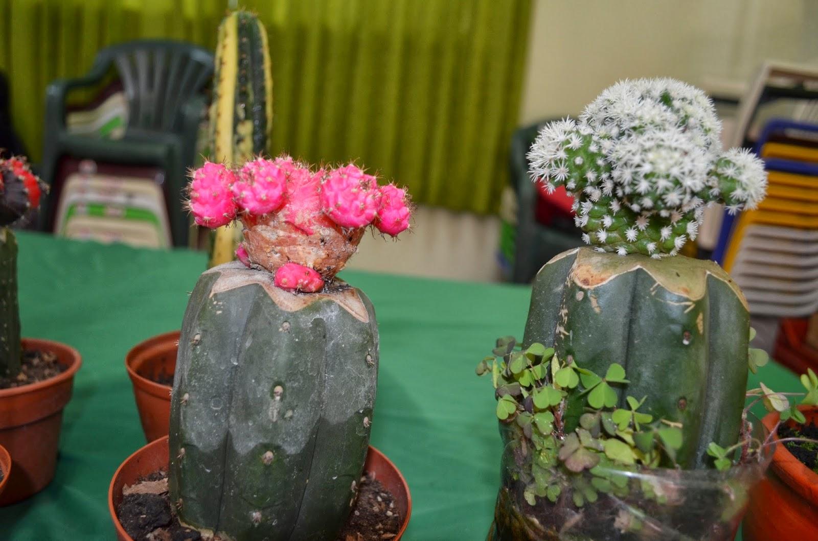 Agro jun n organizan feria de plantas forestales y for Que significa plantas ornamentales
