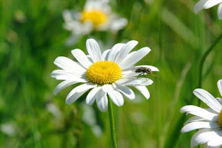 Dia de la Primavera, parte 1
