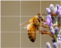 Tempat belajar Fotografi makro
