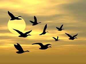 Prinsip Burung