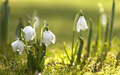 natura primavara flori