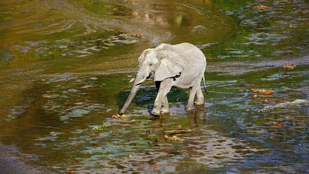Elephant HD Wallpaper 12