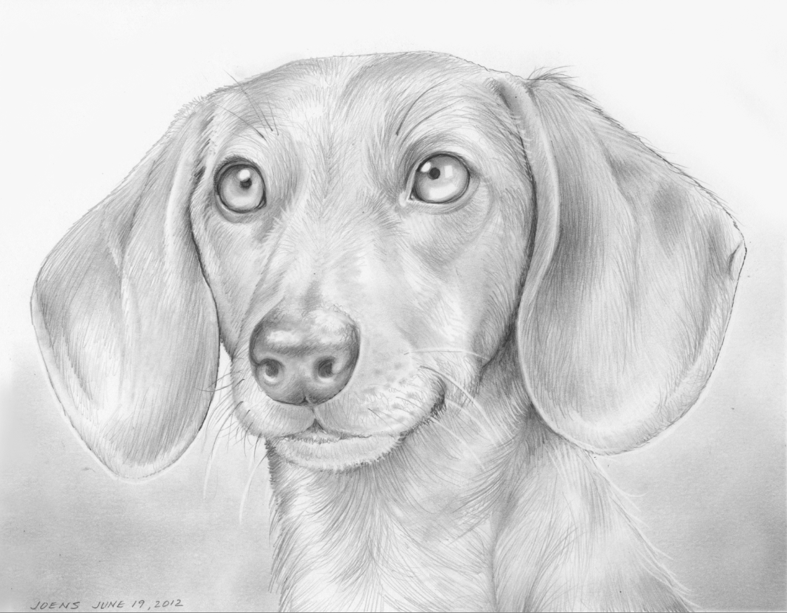 how to draw a cute dachshund
