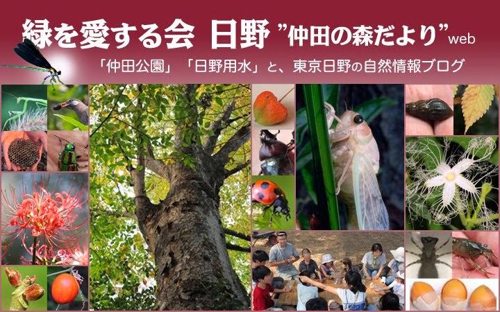 """緑を愛する会 日野 """"仲田の森""""だより WEB"""