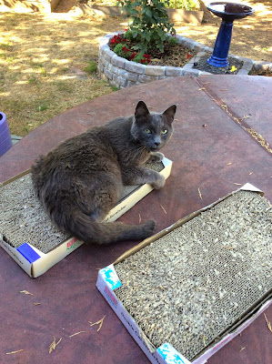senior cat carboard scratching posts