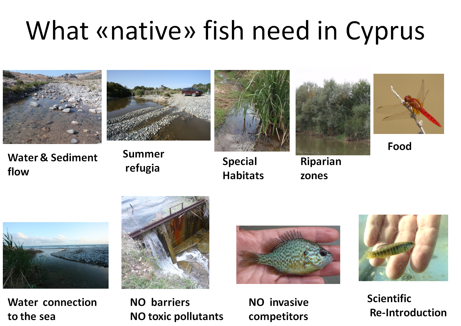 Freshwater fish conservation - After Working In The Field In Cyprus For Freshwater Fish Research Since 2009 My Colleagues And I Feel It Is Time To Do More Writing