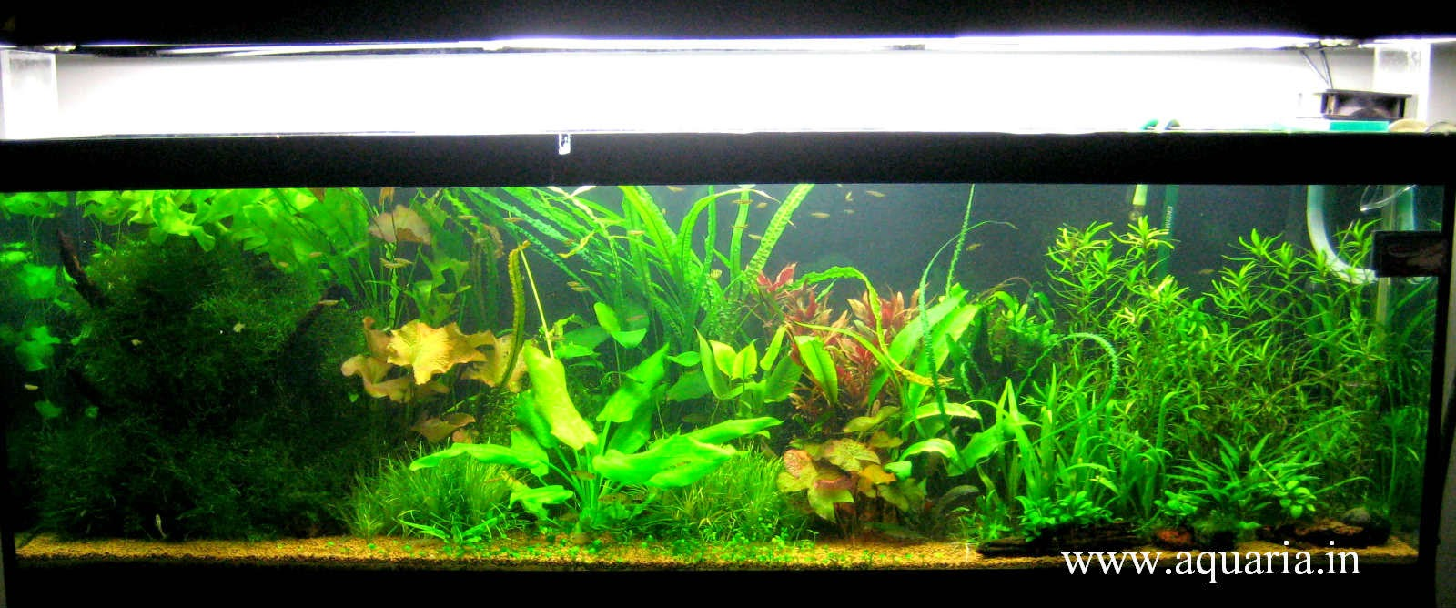 Aquarium fish tank in chennai - Http Www Aquaria In