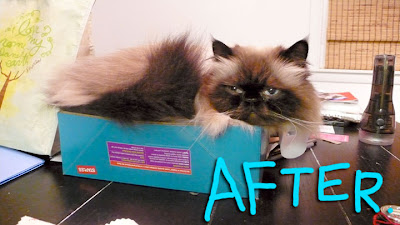 cat-before-after-02