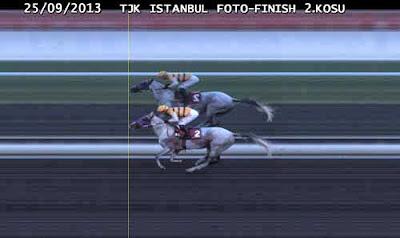 tozan yarış atı