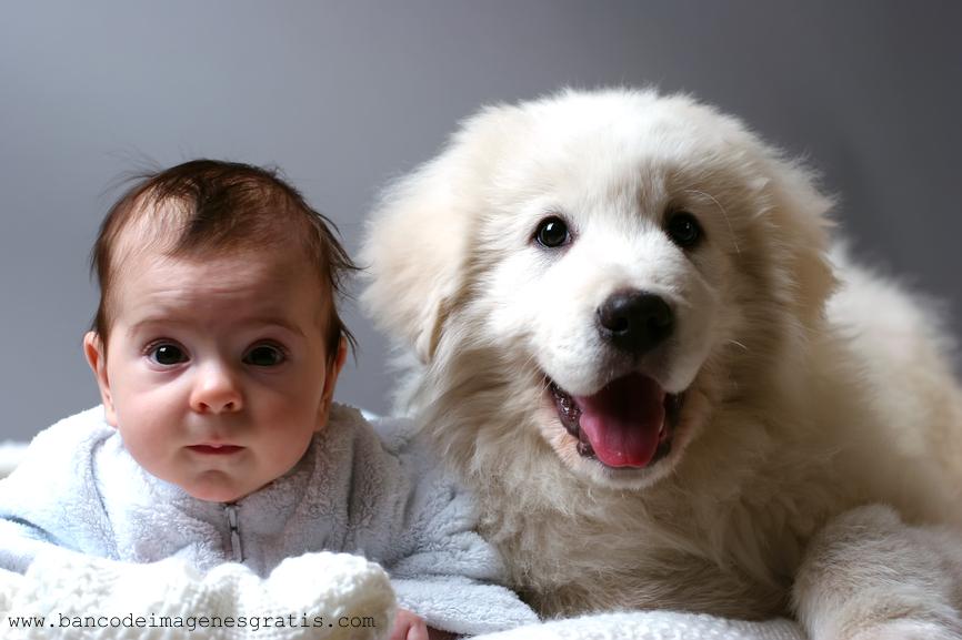 Beb   Con Su Hermoso Perro Ni  Os Y Mascotas  Imagenes Facebook