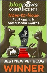 Traveling Cats is the Best New Pet Blog winner at BlogPaws