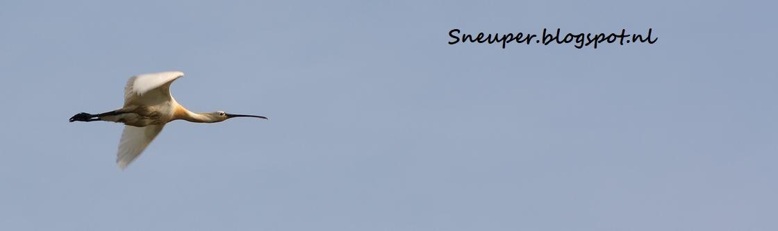 Sneuper