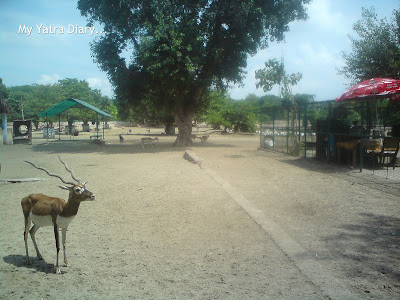 Deer park in Raman Reti, Gokul-Mathura,Uttar Pradesh