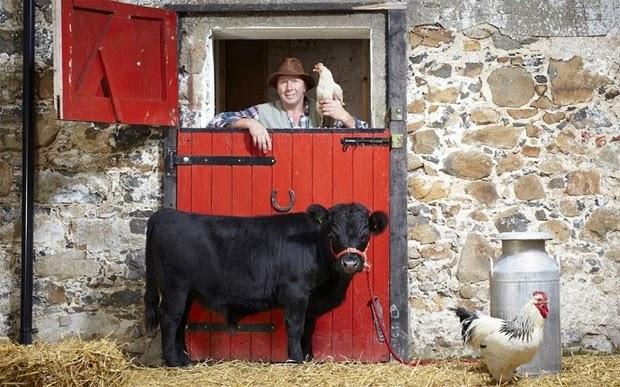 lembu terkecil dunia