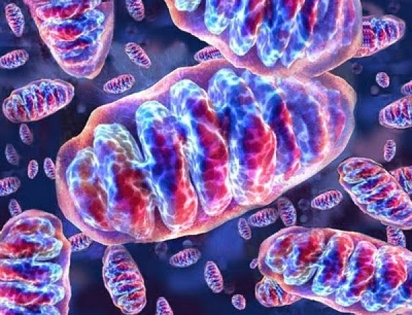 Doenças humanas relacionadas ao DNA mitocondrial