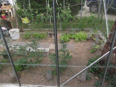 tuteurs pour plants de tomates
