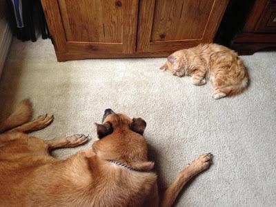 Mika & Buddy Napping