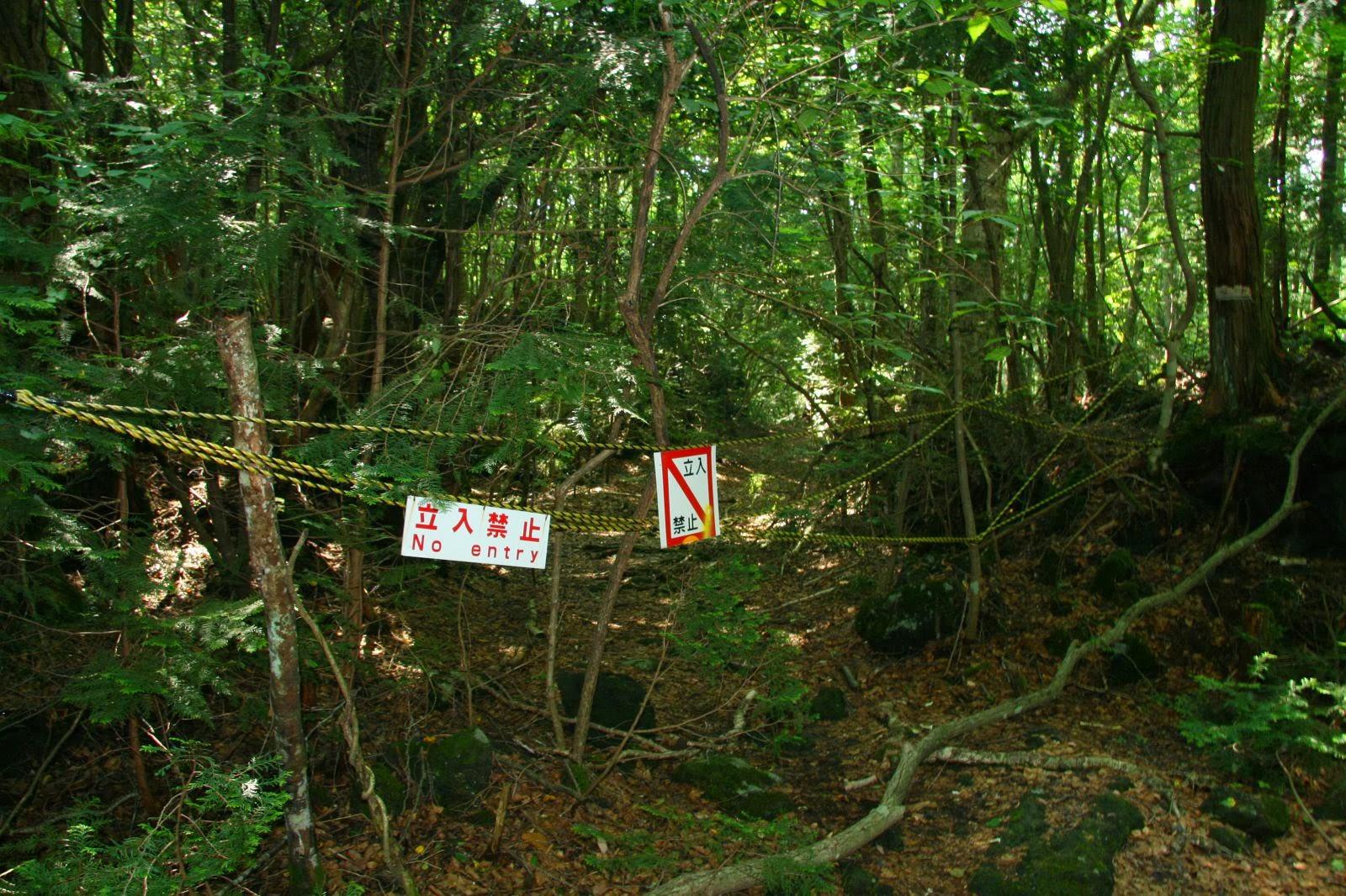 Ans Suicide Forest