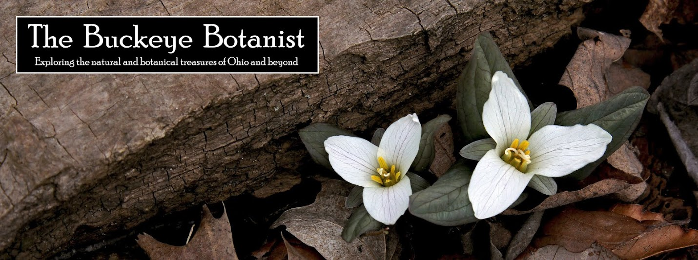 The Buckeye Botanist