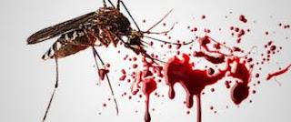 Tips Pengobatan Demam Berdarah Dengan Ramuan Tradisional