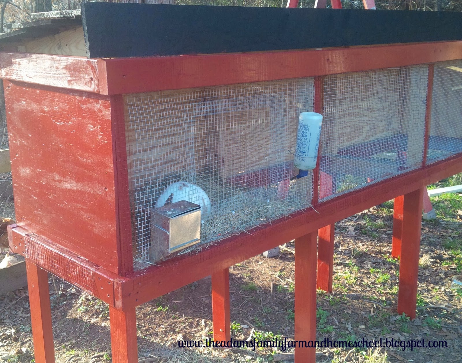 Finished Rabbit Cage with Rabbit Inside