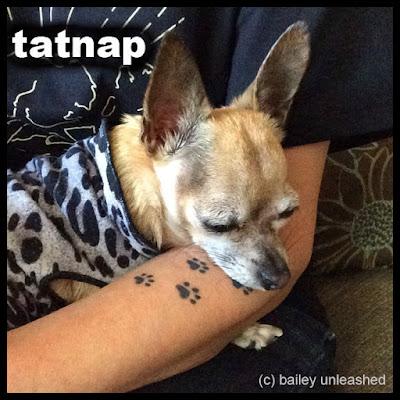 tatnap via baileyunleashed.com