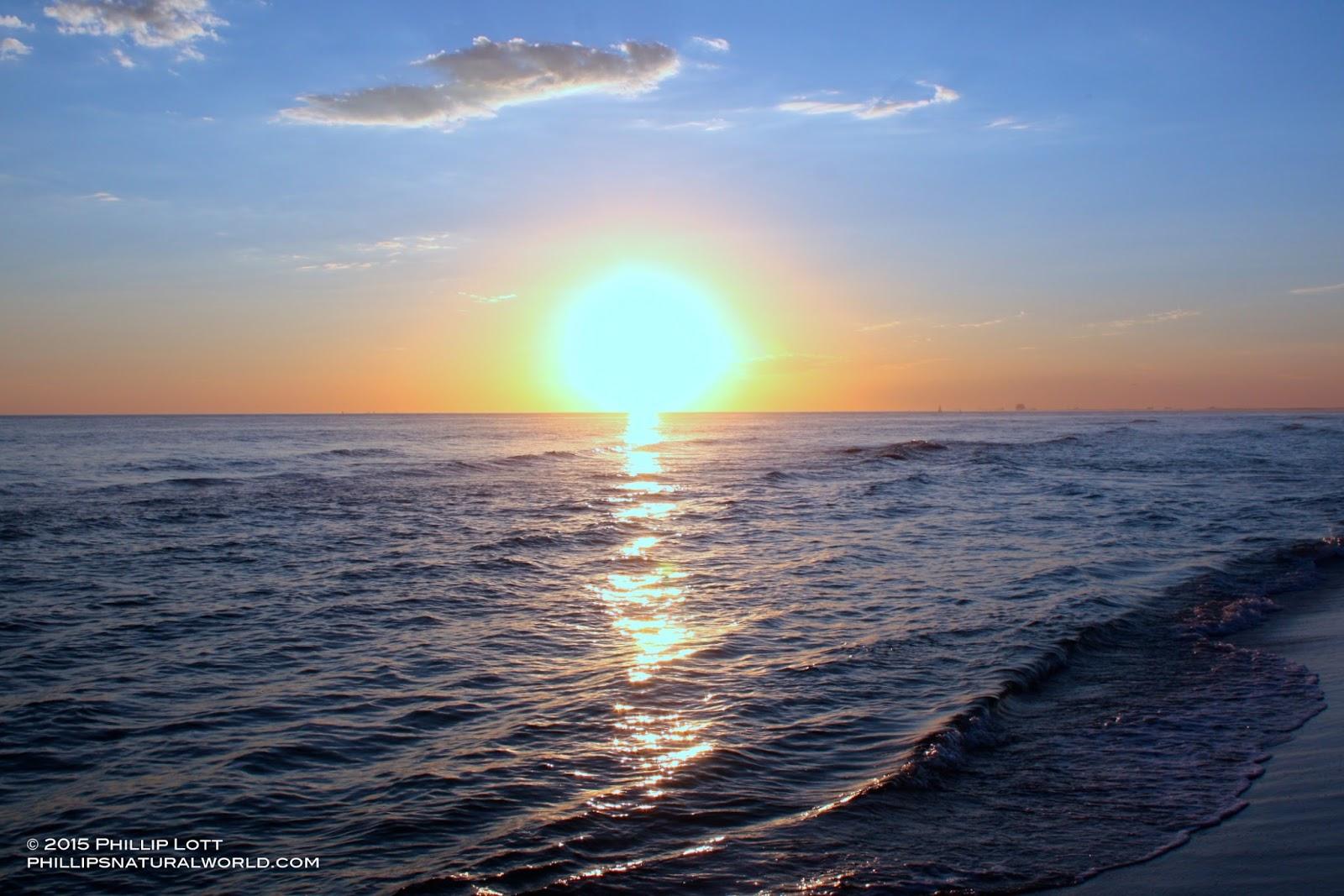 Summer Solstice Sandhills >> Summer Solstice And Alligators Phillip S Natural World