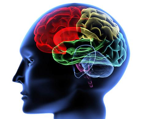 Psicología: Psicobiología y Genética Conductual