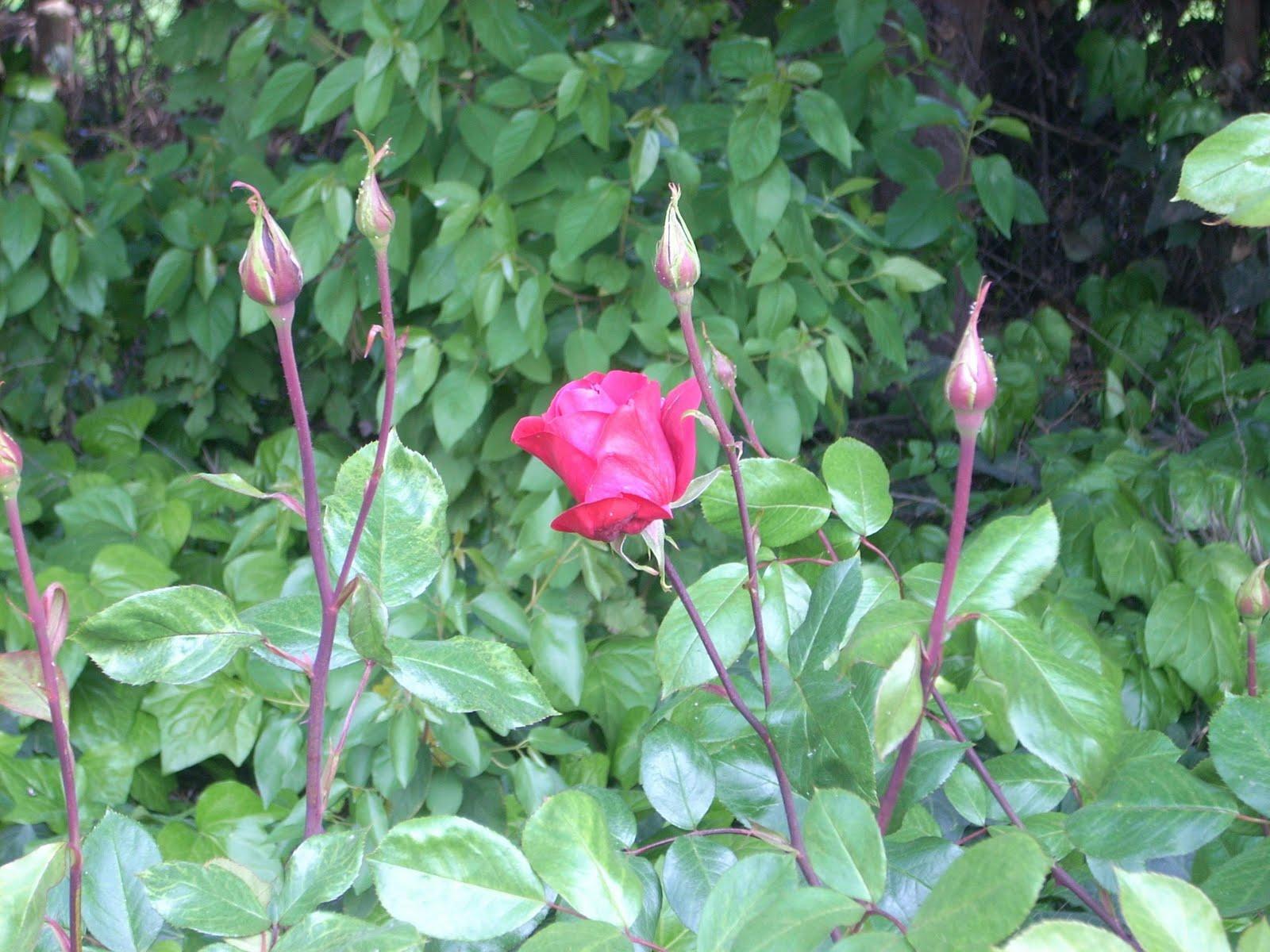 Mar a elena en lonqu n mi jard n silvestre my wild garden for Viveros en lonquen