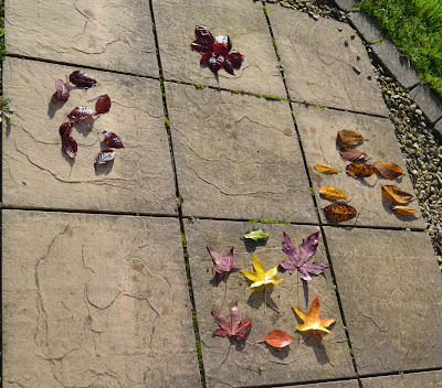 leaf hopscotch