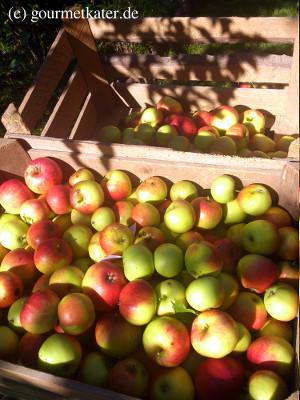 schöne Äpfel