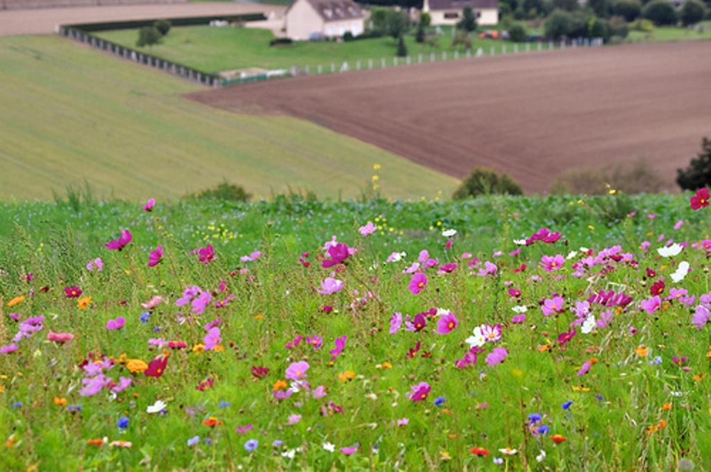 ... les beaux fleurs des champs !!