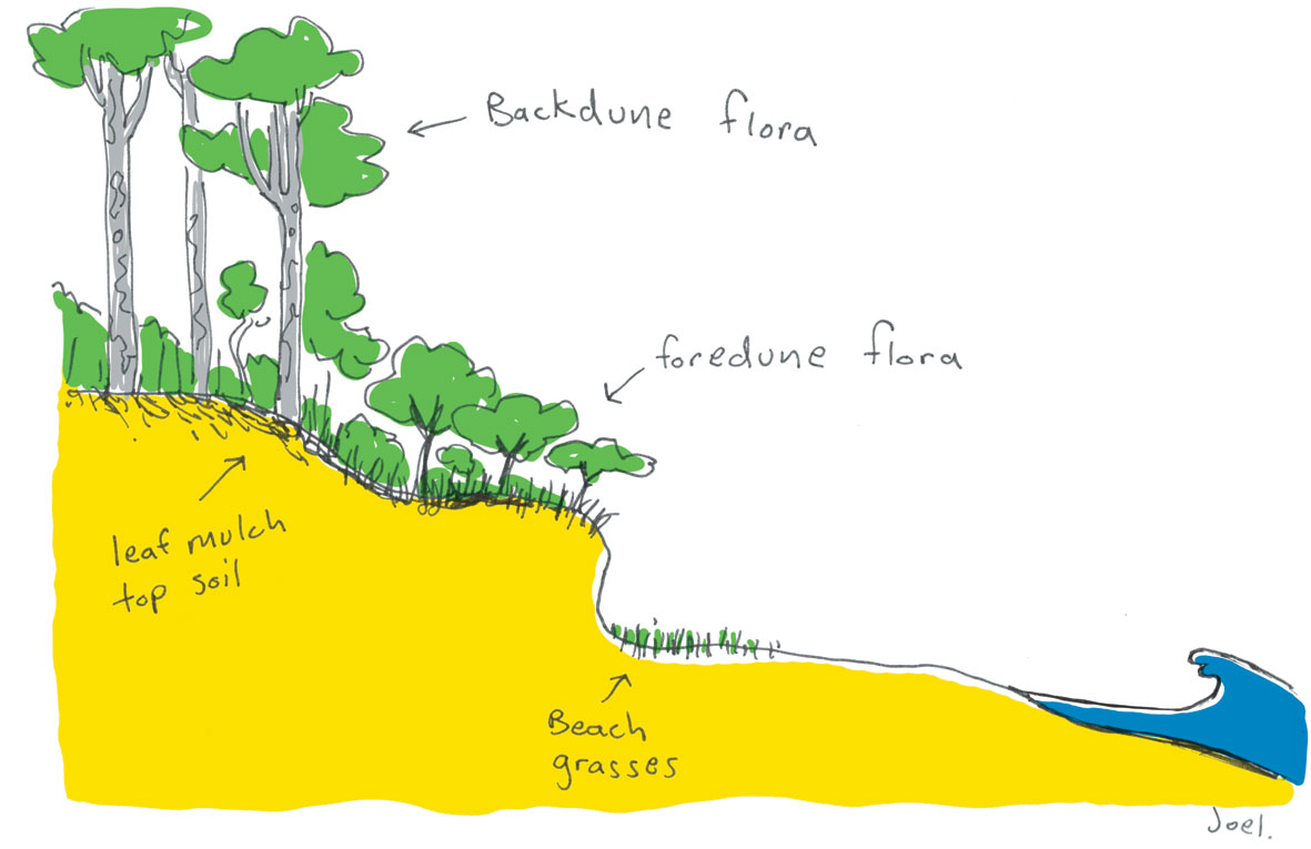 dune formation What is a sand dune sand dunes are some of nature's most scintillating creations these eye-catching land masses are found around the.